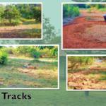OCeAn Vaidyashaala Walking Tracks